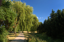 Photo of a park in Thornhill, Ontario